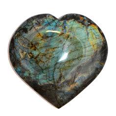 Labradoriidist süda